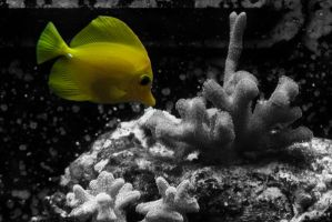 Day 32: The Aquatic Life by ScENeYmE