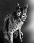 Speedpaint-Black and White by Dustyleef