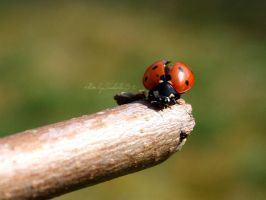 Coccinelle by BEllebasi