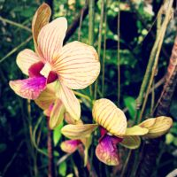 Orchid by iammillerdejose