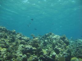 Coral Reef 1 by BandAstock