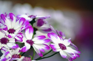 Purple and White Flowers by A-Sped-Kid