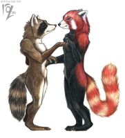 Raccoon and Lesser Panda by rosequoll
