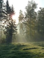 enlighted meadow 2 by SelvaStock