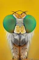 Long-Legged Fly by AlHabshi