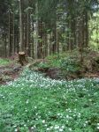 Spring forest floor by CAStock