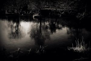 The Pond by Linlith
