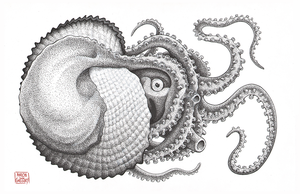Argonaut Octopus by aaronjohngregory