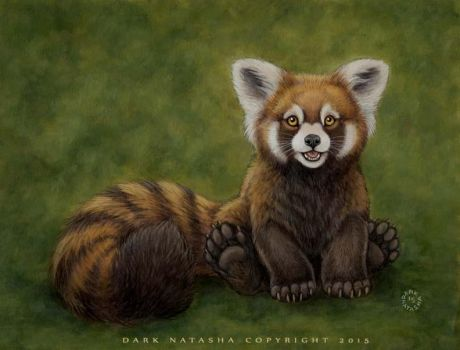 Little Red Panda by darknatasha
