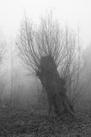 Tree stump in Misty Land by steppeland