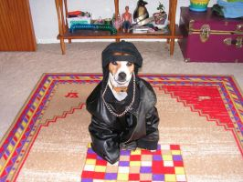Sparky the Coolest Dog by sparkycom
