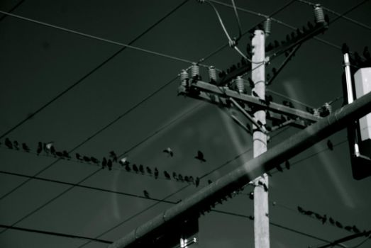 birds on a wire by Fayde2Memory