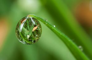 Dew Drop Natural by Alliec
