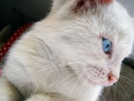 pink nose... by puszika