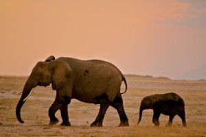 Elephants at Sundown by porpierita