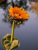 Flower on the Lake by angeliquechristine