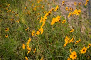 Yellow Field by DNDBlog