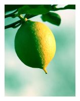 Lemon tree by DarknessHope