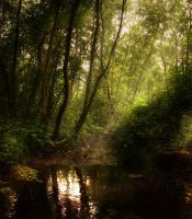 Silent Forrest by xrust
