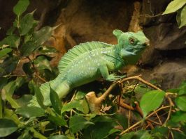 reptile by KTVL-resources