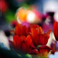 United colors by FlorinALF