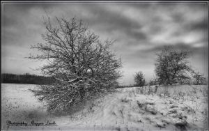 Hungarian landscapes. HDR. -pictures. (Crataegus) by magyarilaszlo