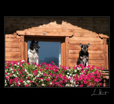 Two Dogs, Austrian Alps by eehan