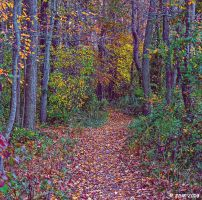 Fall Trail by JDM4CHRIST