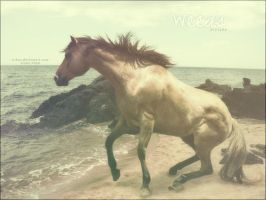 rocky beach horse by renderedsublime