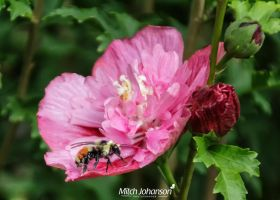 Resting on the Flower by mjohanson