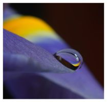 purple droplet 3 by mzkate
