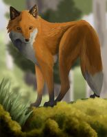 Forest fox by BecciES