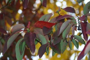 Leaves 1 by waterweed-stock