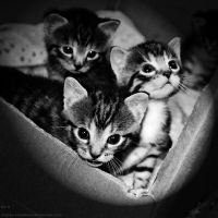 cat'ys by angies-soulshow