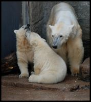polar bear: play with me, pls by morho