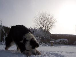 My Dog in Snow by AdamGlewGraphics