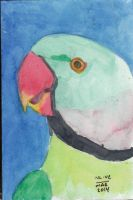 Indian Ringneck by Vampiric-Conure
