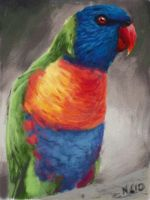Art Academy: Rainbow Lorikeet by napalmnacey