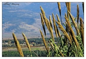 View to Galilee by ShlomitMessica