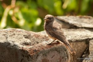 Bird is the Word by NorbertKocsis