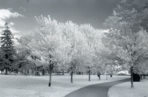 .Infrared. by sugaroo
