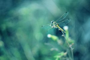 Little blue dragonfly by joiedevivre89