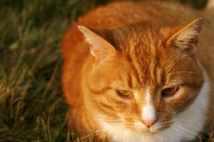 Christopher the Cat by PsychicPsycho