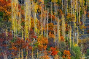 Color Bonanza.. by M-Atif-Saeed