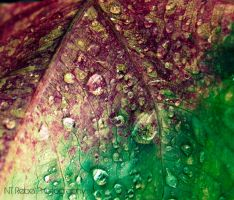 Dew Drops 2 by musicity