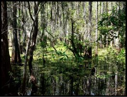 The Unforgivable Swamp by luv-maiki
