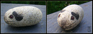 Himalayan Pebble Piggie by Siobhan68