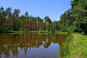 pond in the forest by Mittelfranke