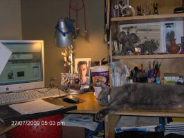 My Working Area and Cat by ILoveCP