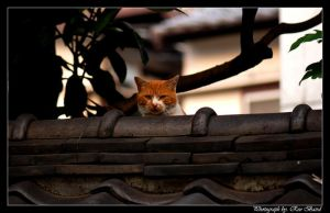 Cat on a wall by VortXxe